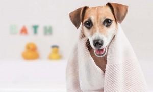 Mobile Dog Wash Oldbury West Midlands