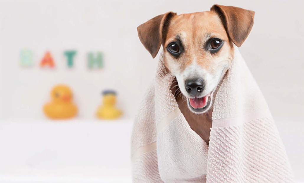 Mobile Dog Wash Oldbury West Midlands